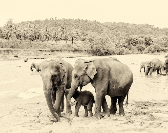 RIVER ELEPHANTS 4. Elephants Prints, Sri Lanka Prints, Giclee Print, Limited Edition Prints, Wildlife Prints, Sepia Prints, Travel Prints,
