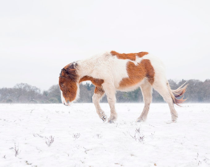 CHRISTMAS HORSE PRINTS, Equine Print, Extra Large Print, New Forest Pony, Winter Print, Horse In Snow, Animal Prints