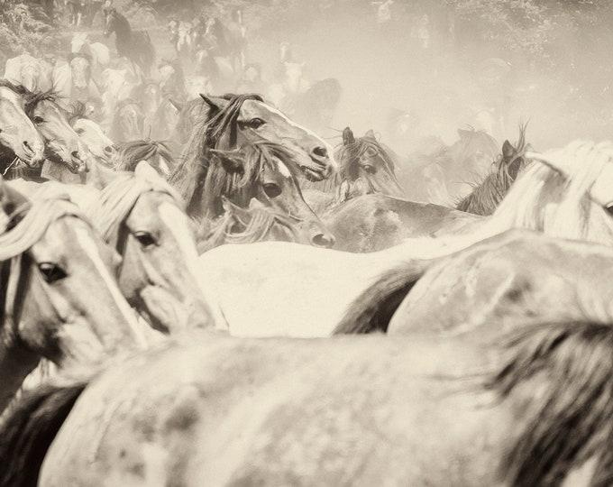 THE HERD 4. Galloping Horses, Equine Print, Wildlife Print, Wild Horses, Sepia Tone Print, Limited Edition Print