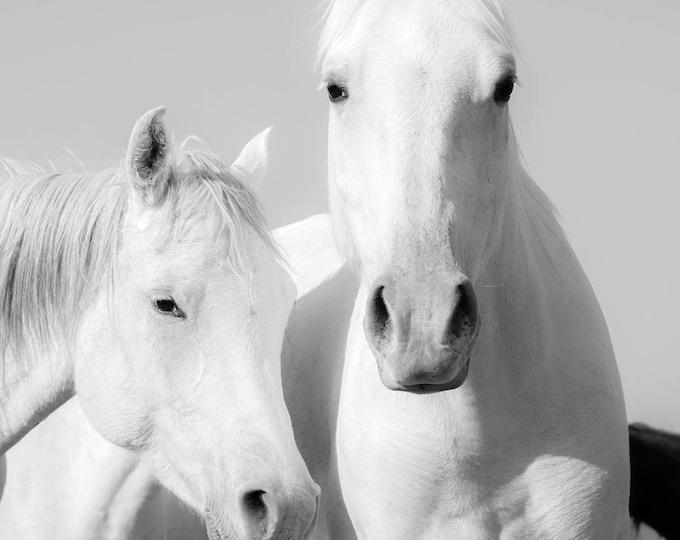 WHITE ARAB HORSES Print, Horse Decor