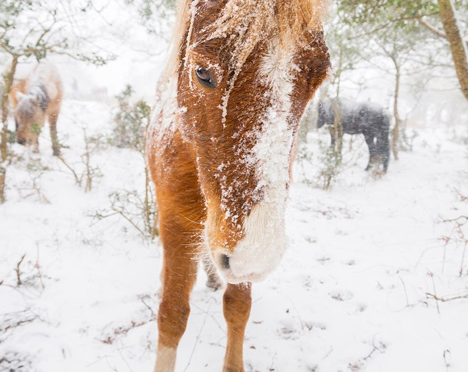 COLOUR WINTER HORSE Print
