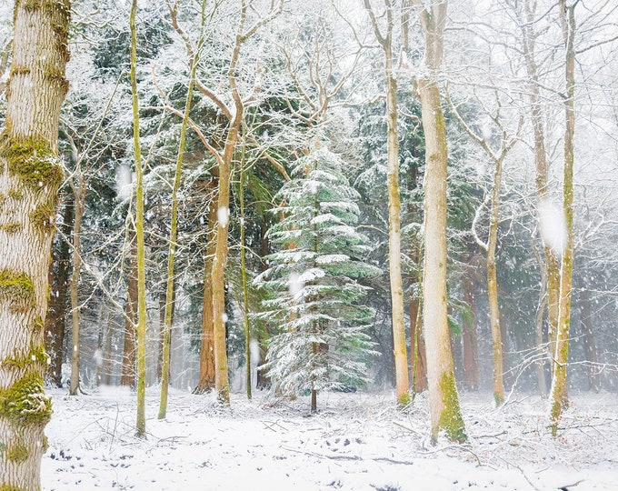 SNOW TREES. Christmas Prints, Winter Print, Snowy Forest, New Forest Prints, Dorset Prints, Christmas Tree Print