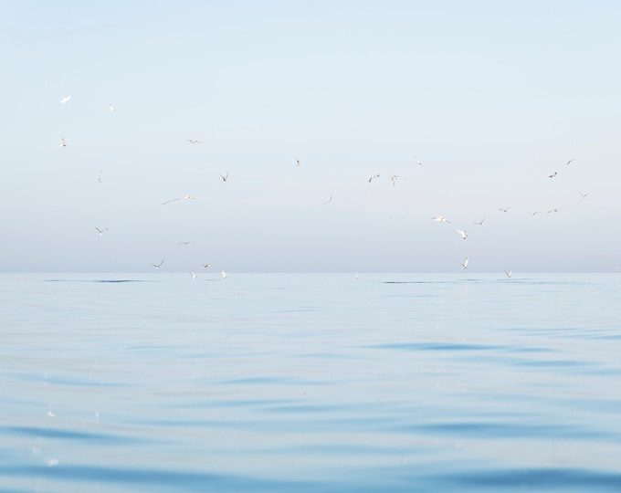 SEAGULLS AT SEA Print