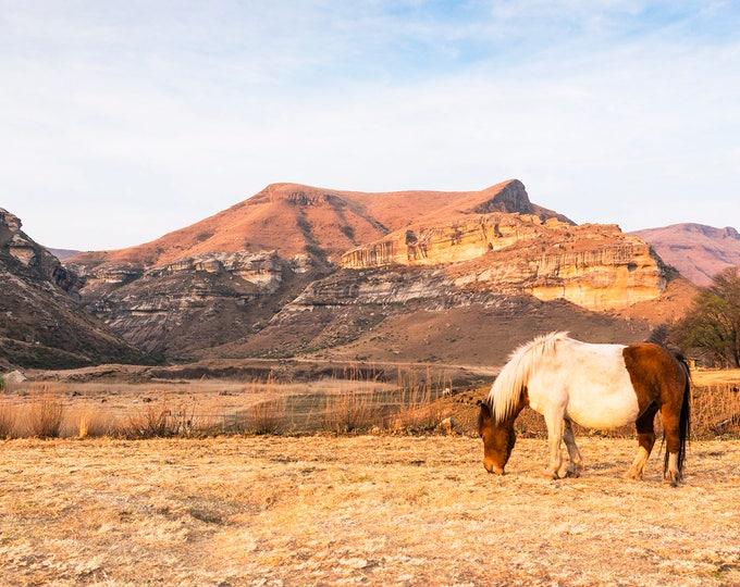 COLOUR HORSE PRINT