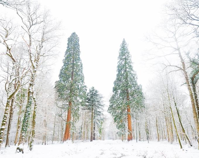 SNOW TREES, Christmas Trees Print, Winter Prints, New Forest Print, Dorset Print, Snowy Forest print