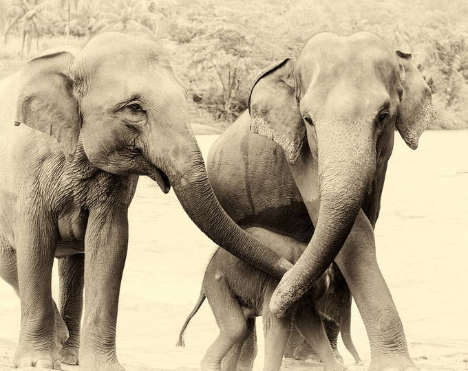 RIVER ELEPHANTS 3. Elephant Prints, Sri Lanka, Giclee Print, Wildlife Prints Limited Edition Print, Travel Photography, Sepia Toned Prints