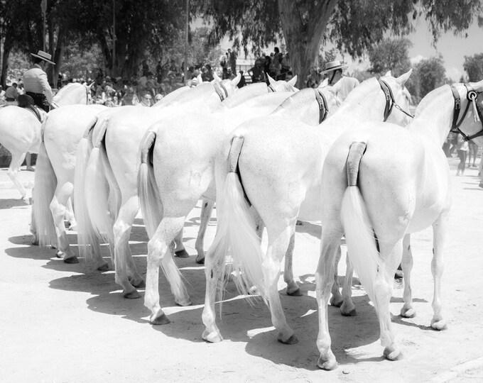 SPANISH WHITE HORSES Print