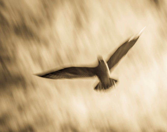 SEAGULL 2. Seagull Print, Bird Flying, Sepia Tone, Wildlife Picture, Photographic Print, Limited Edition.