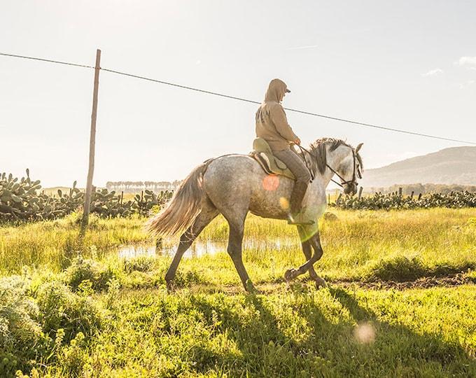 SPANISH HORSE PRINT
