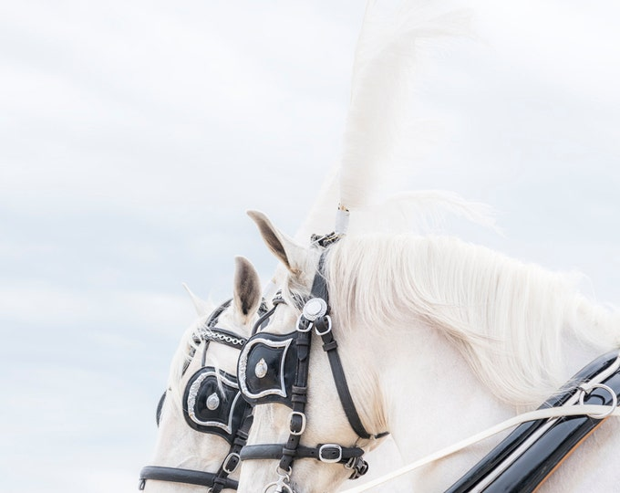 Beautiful White Horse Print, Equine Art Print, Horse Photography, Limited Edition print, Photographic Print, Gifts For Her