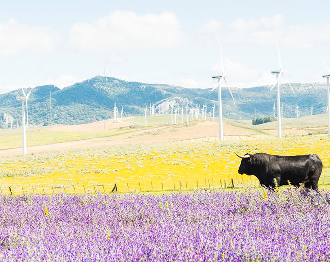 BULL AMONGST FLOWERS. Acrylic Mounted Print, Spain Prints, Landscape Print, Travel Prints, Animal Prints, Limited Edition Print,