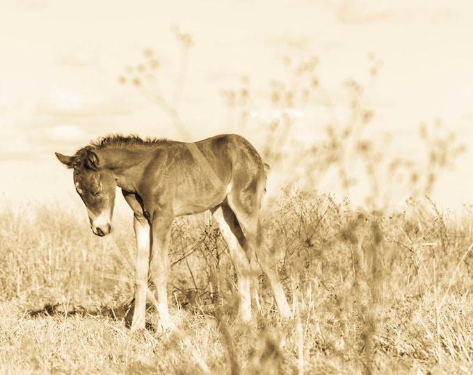 SEPIA HORSE FOAL Print