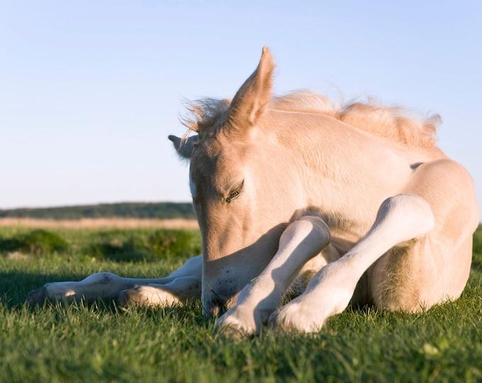 HORSE FOAL PRINT