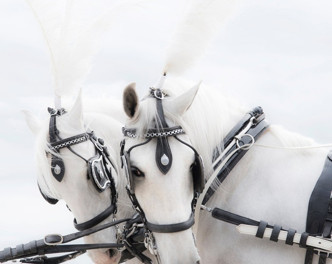 WHITE HORSES PRINT