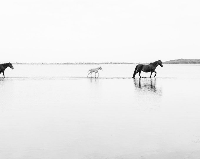 WALKING ON WATER, Horse Prints, Equine Print, Animal Prints, Wildlife Print, Dorset Prints, Black and White Art
