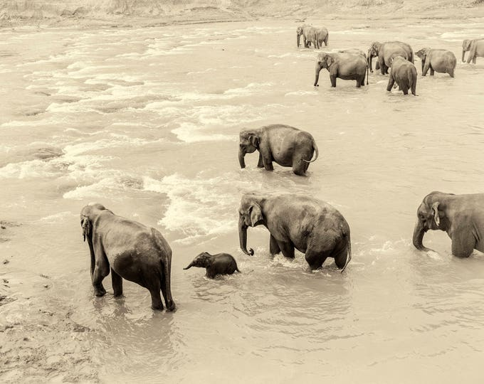 RIVER ELEPHANTS PRINT, Wildlife Photography