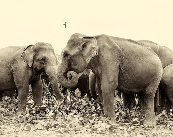 SRI LANKAN ELEPHANTS.  Elephants Prints, Sri Lanka Prints, Giclee Prints, Limited Edition Print, Photographic Prints, Wildlife prints, Sepia
