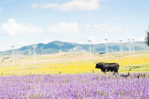 Black Bull Amongst Flowers