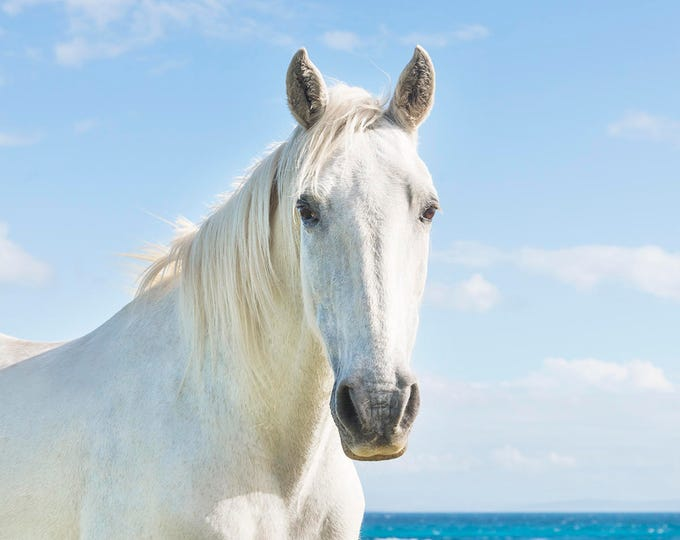 WHITE HORSE PRINT, Horse Wall Art, Horse Decor