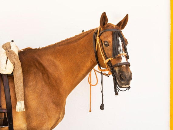 "Horse Prints, ""ANDALUCIAN STALLION"" . Brown Horse, Spanish Horse, Spanish Print, Limited Edition, Photographic Print."