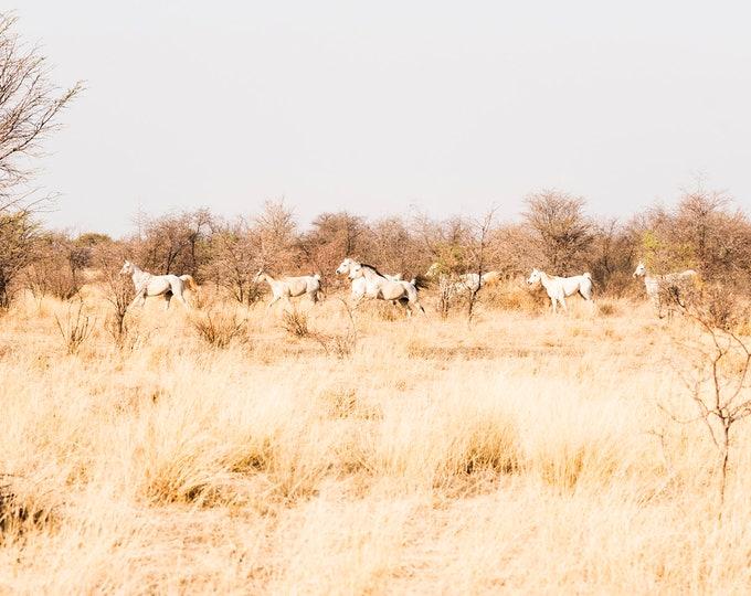KALAHARI ARABS. Galloping Horses, South Africa, Equine Print, Animal Print, White Horses, Photographic Print