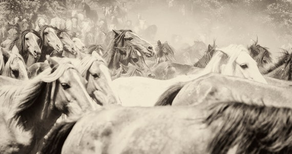 THE HERD 4. Galloping Horses, Equine Print, Wildlife Print, Wild Horses, Sepia Tone Print, Limited Edition Print