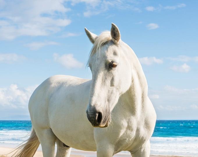 WHITE HORSE PRINT, Horse Decor