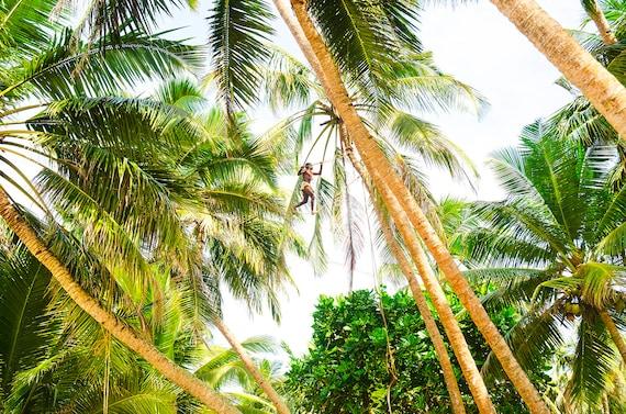 TREE MAN. Sri Lanka, Travel Photography, Limited Edition, Photographic Print, Palm Trees.