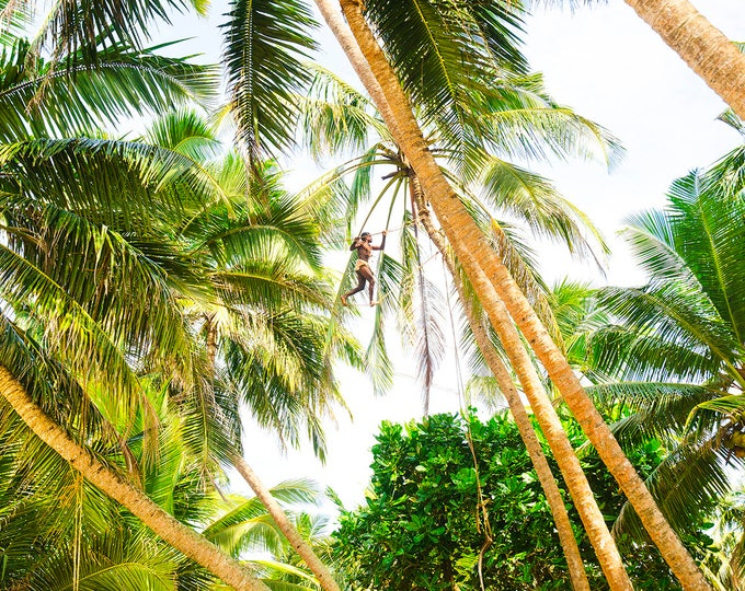COLOUR PALM TREE Print