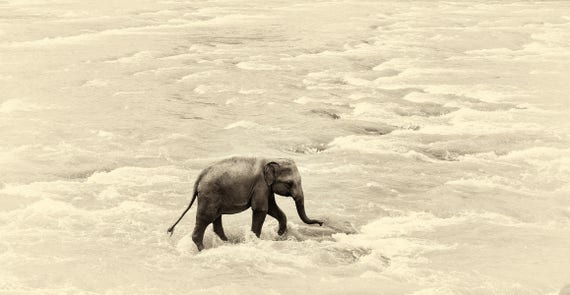 RIVER ELEPHANTS 5. Elephant print, Sri Lanka, Giclee Print, Limited Edition Print, Wildlife Photography