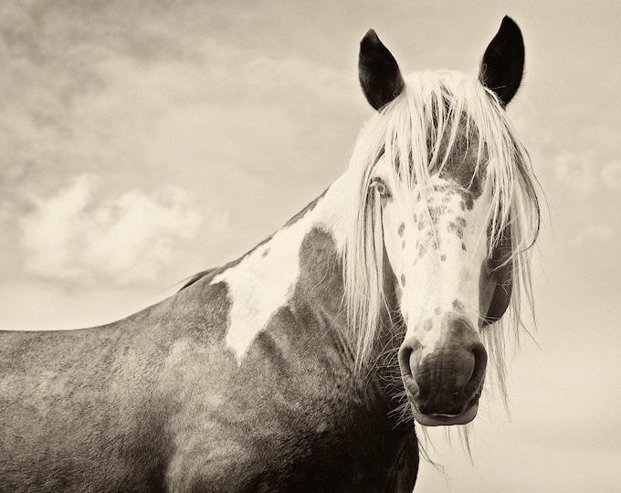 HANDSOME 2. Horse Prints, Equine Photography, Animal Photos, Black and White prints, Fine Art Photography, Monochrome Prints,
