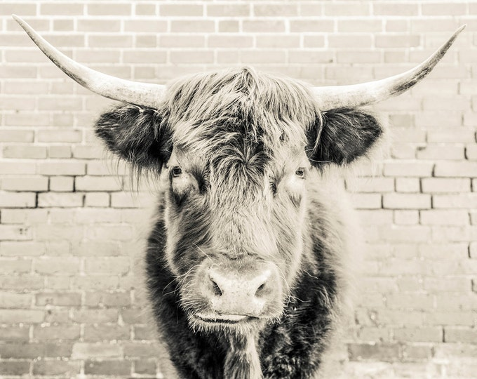 COW PRINT, EXTRA Large Wall Art
