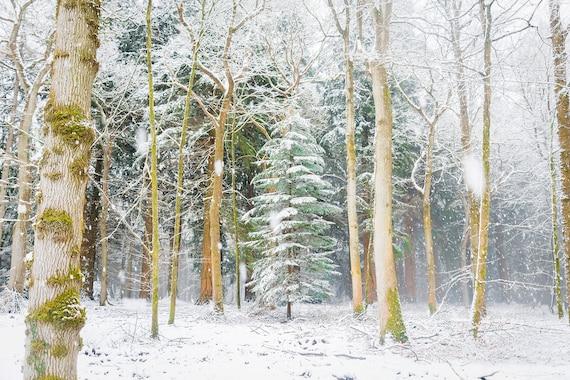 SNOW TREES. Christmas Prints, Winter Print, Snowy Forest, New Forest Prints, Dorset Prints, Christmas Tree Print