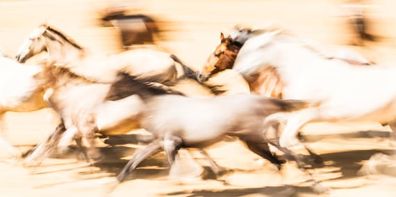 "Horse Prints, ""SPANISH HORSES 3"". galloping horses, andalucian horses, photographic print, limited edition print"