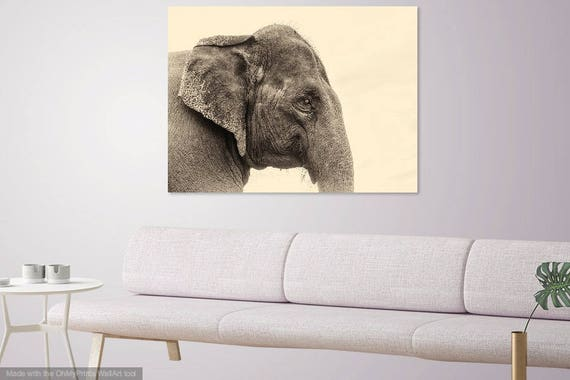 ELEPHANT WISDOM.  Elephant Print, Giclee Print, Animal Portrait, Limited Edition, Photographic Print