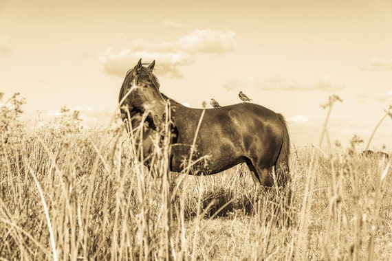 HORSE AND BIRDS. Horse Print, Equine Print, Photographic Print, Limited Edition Print
