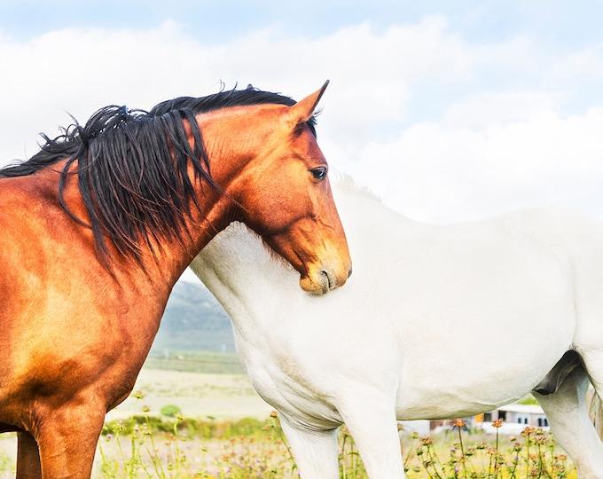 SPANISH HORSE PHOTO Print