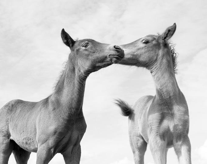 BLACK AND WHITE Horse Print