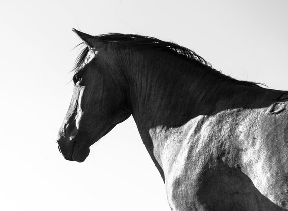 Black Horse, Black Beauty, Horse Print, Equine Prints, Black and White Print, Animal Print, Black Stallion,