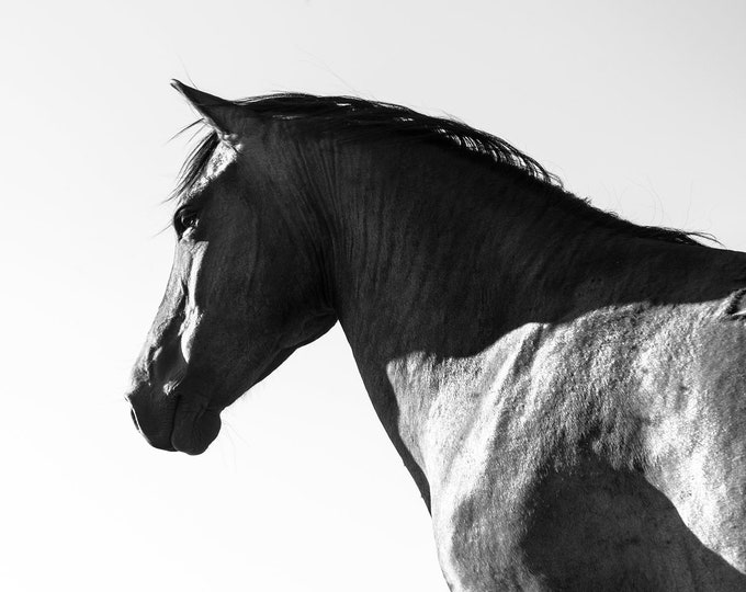 BLACK AND WHITE Horse Print, Large Horse Prints