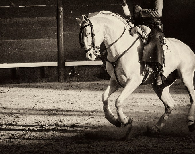 WHITE CHARGER. White Horse Print, Equine Prints, Horse Photography, Black and White Print, Spain, Travel Prints, Bullfighting Print, XXL