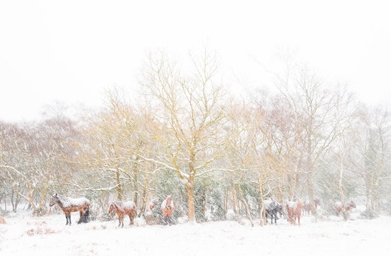 "Horse Prints, ""Snow Horses 3.' New Forest Print, Winter Landscape, Christmas Prints, Animal Print, Snow Landscape"
