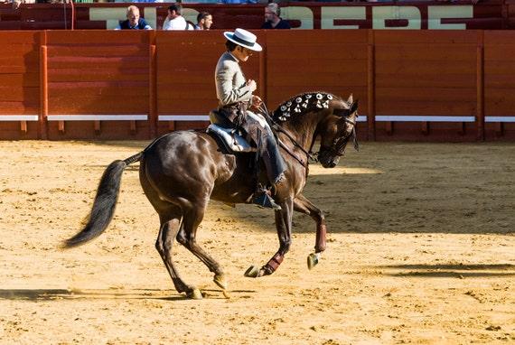 Spanish caballero. horse print, equine print, wall art, limited edition print, photographic print