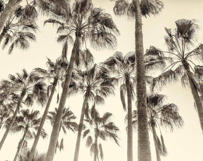 TALL PALM TREES Giclee Print