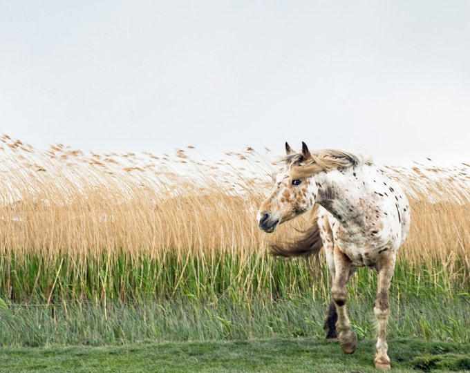 APPALOOSA HORSE PRINT