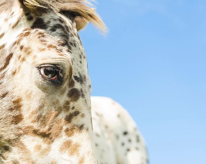 HORSE PRINTS, Horse Photography, Animal Art Print