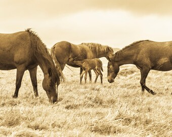 UNTITLED. Horse Print, Sepia Toned, Christchurch Picture, Dorset Print, Photographic Print, Limited Edition.