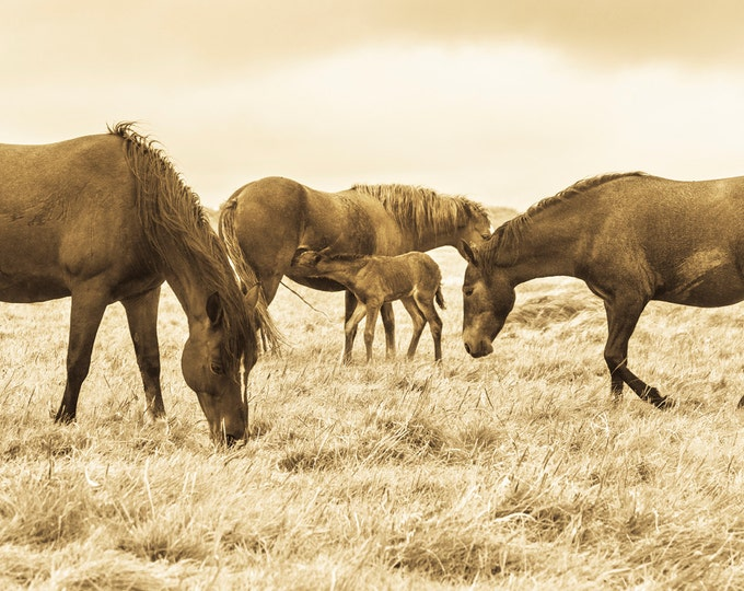 SEPIA TONED HORSE Print