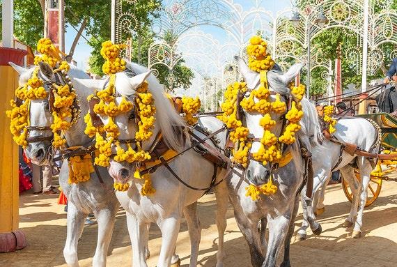 The Jerez Horse Festival,white horses,horse prints,equine prints, limited edition print, Spanish Horses