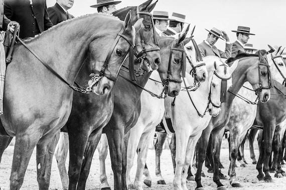 "Horse Prints, ""The Line Up"", Spanish Horses, Travel Prints,Equine Prints, Black and White Prints, Cowboy Prints, Equestrian Prints"